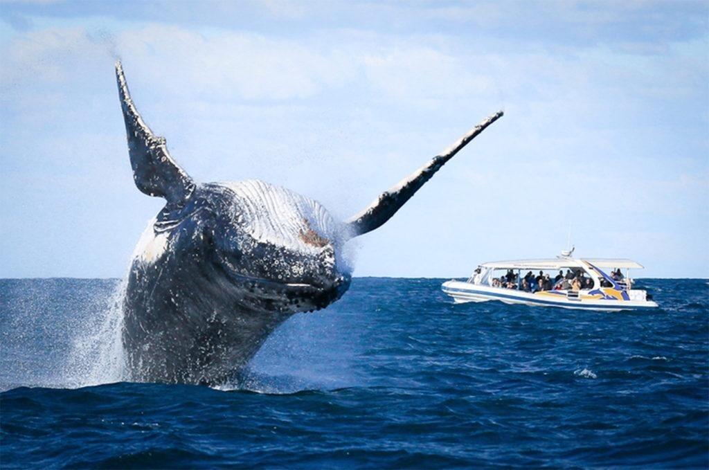 горбатый кит прыжок
