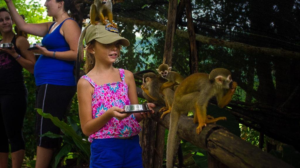 что посмотреть в доминикане обезьяны