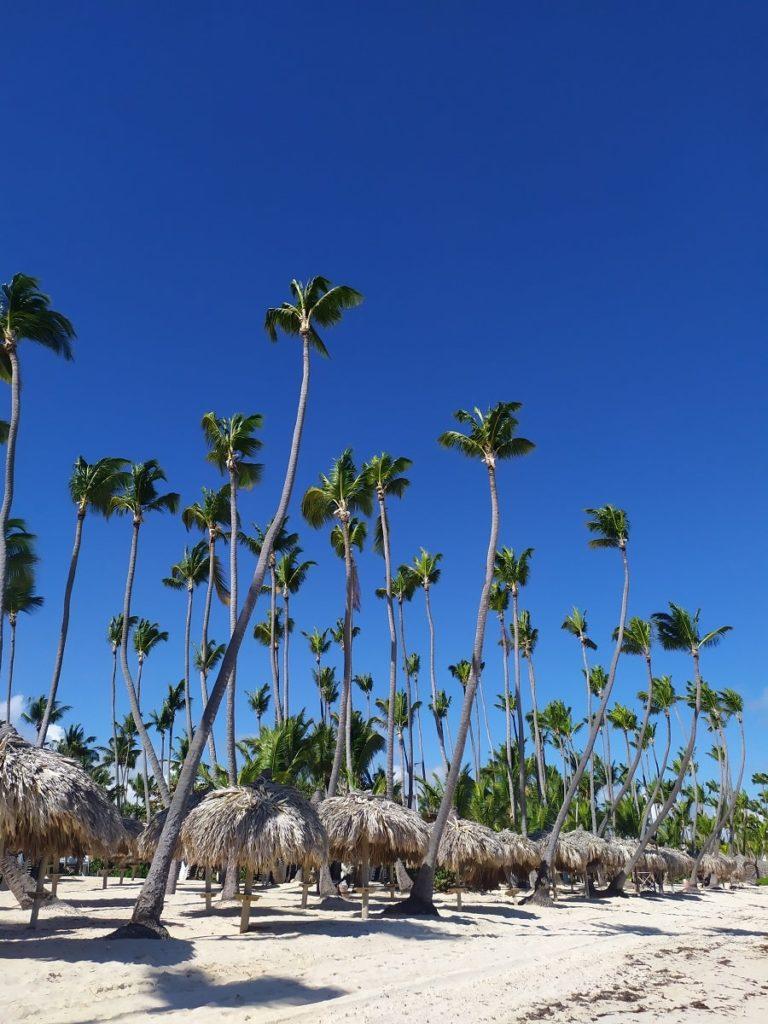 пальмы на пляже баваро
