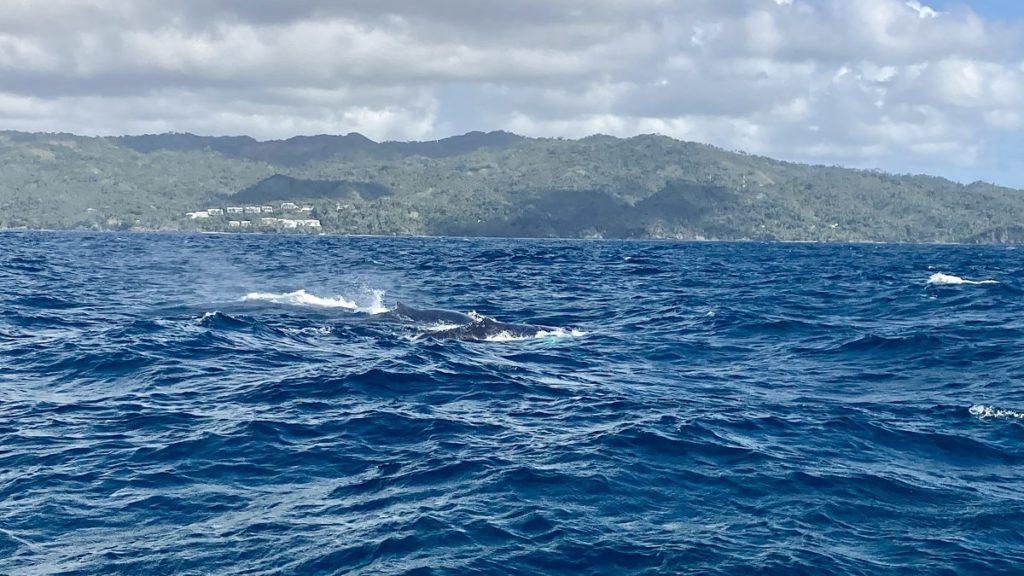 достопримечательности доминиканы киты