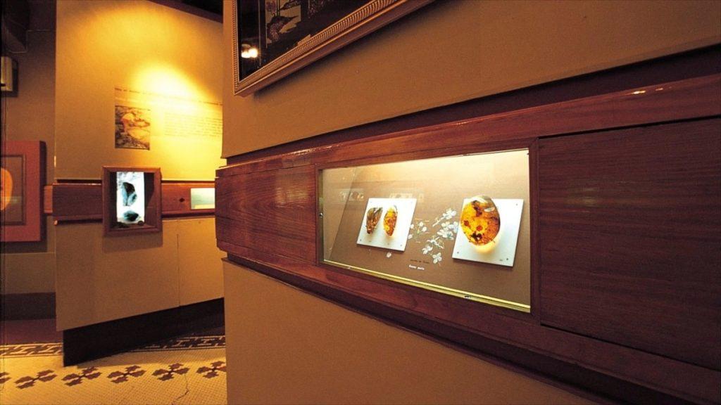 музей янтаря в доминикане