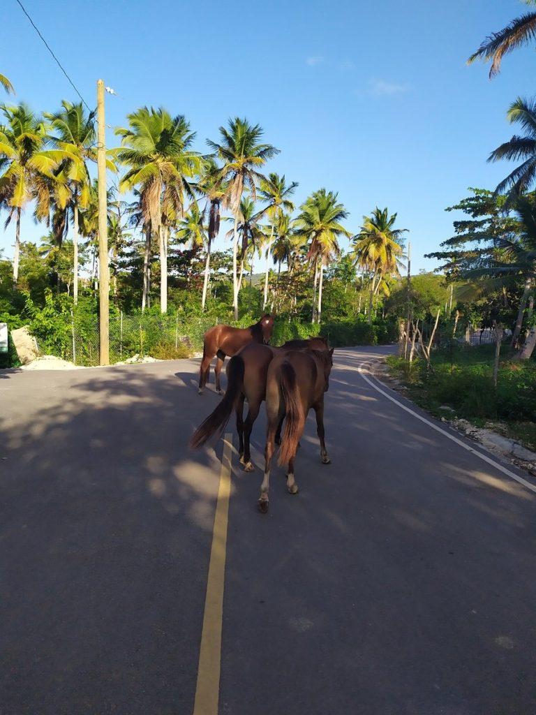 Лошадки на дорогах саманы