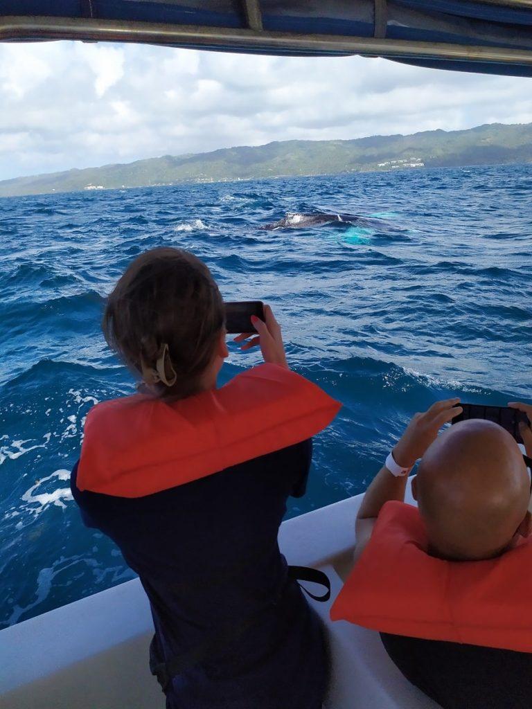 Экскурсия в Доминикане горбатые киты