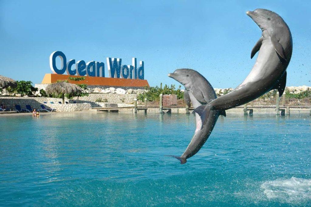 Парк приключение океан ворлд Доминикана