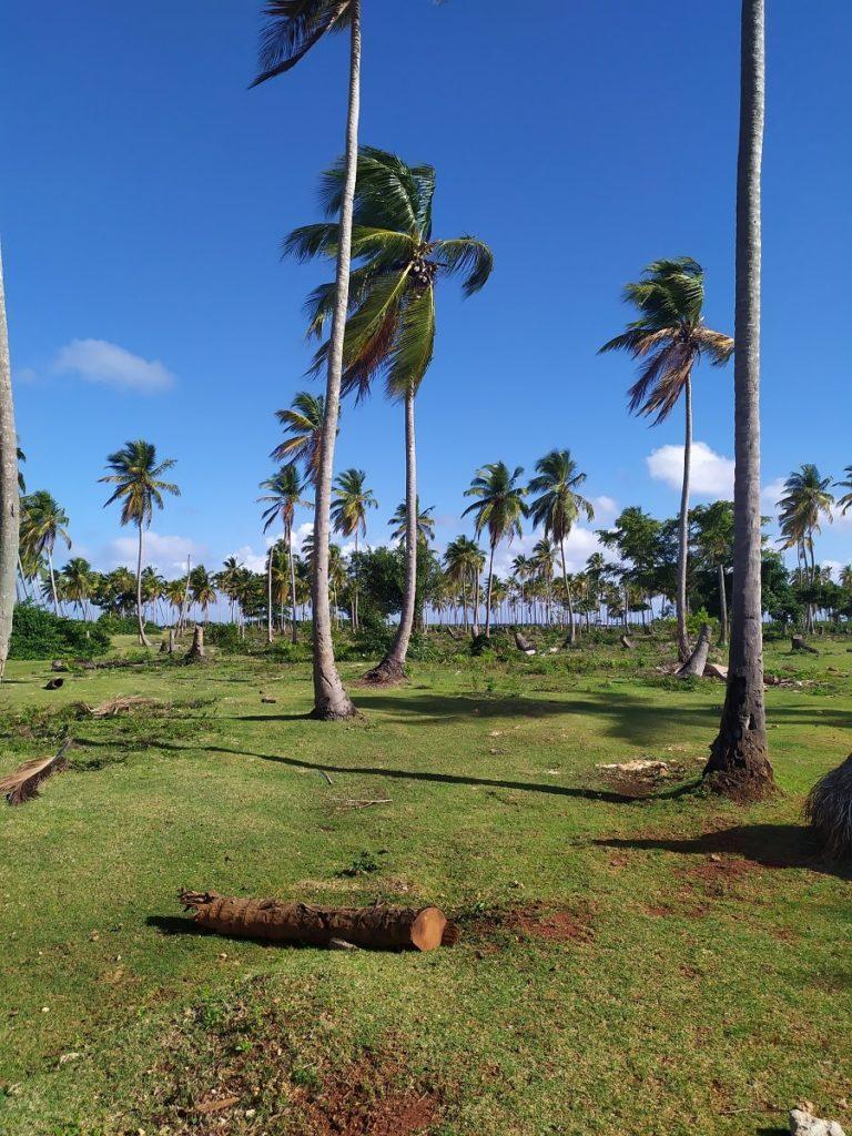 Лес в Доминикане